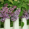 Does A Good Fence Make for A Good Neighbour?